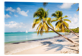 Acrylic print  Les Salines beach, Martinique - Matteo Colombo