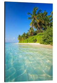 Aluminium print  Dream beach in the Maldives - Matteo Colombo