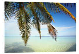 Acrylic print  Palm tree and ocean, Maldives - Matteo Colombo