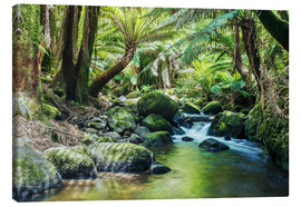Canvas print  Rainforest in Tasmania - Matteo Colombo