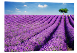 Acrylic print  Lavender field and tree - Matteo Colombo