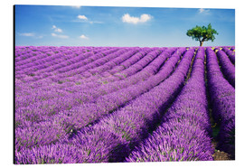 Aluminium print  Lavender field and tree - Matteo Colombo