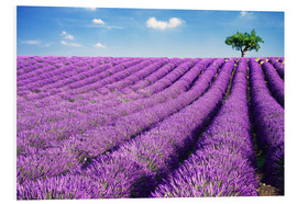 Foam board print  Lavender field and tree - Matteo Colombo