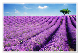 Premium poster Lavender field and tree