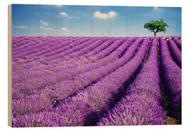 Wood print  Lavender field and tree - Matteo Colombo