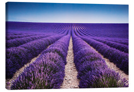 Canvas  Lavender field in Provence - Matteo Colombo