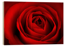 Wood print  red rose - pixelliebe