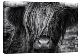 Canvas  Scottish Highland Cattle - Highlander - Martina Cross