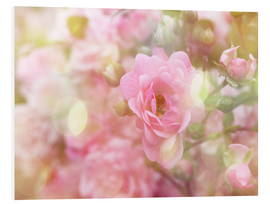 Foam board print  Romantic Rose - Martina Cross