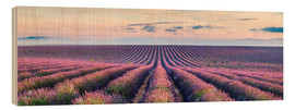 Wood print  Lavender field in Provence - Matteo Colombo