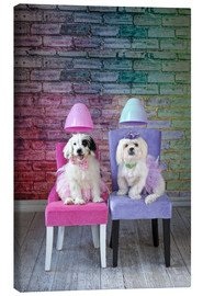 Canvas  Dogs under the hair dryer - Lisa Jane