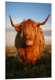 Foam board print  Highland Coo - Martina Cross