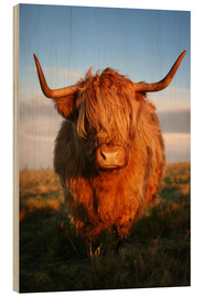 Wood print  Highland Cattle - Martina Cross