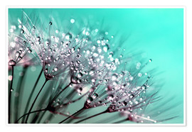 Premium poster  Dandelion Seed Blowballs With Water Droplets - John Lang Art Gallery