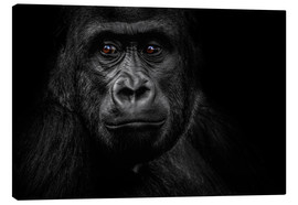 Canvas print  Monkey Gorilla - WildlifePhotography
