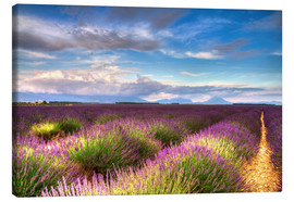 Canvas  Blossom of Lavender, Provence - Circumnavigation