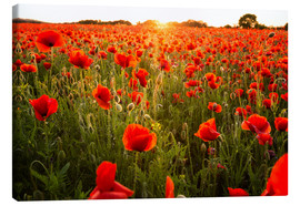 Canvas  Poppy field with sunset - Oliver Henze