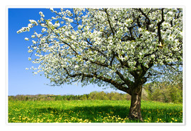 Premium poster Blossoming trees in spring rural meadow