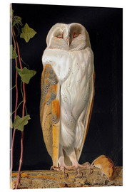 Acrylic print  The White Owl - William James Webbe