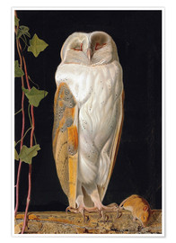 Premium poster  The White Owl - William James Webbe