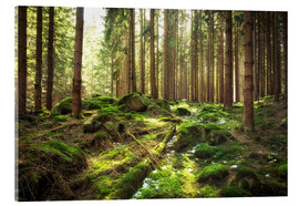 Acrylic print  Spring awakening in the forest - Oliver Henze