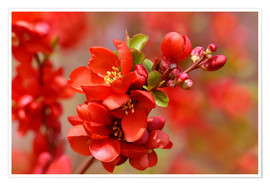 Premium poster Spring in Red