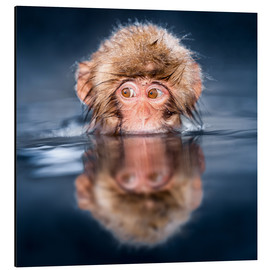 Aluminium print  Japanese Snow monkey bathing - Jan Christopher Becke