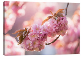 Canvas  Japanese cherryblossom in LOVE 3 - UtArt