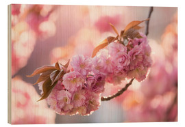 Wood print  Japanese cherryblossom in LOVE 3 - UtArt