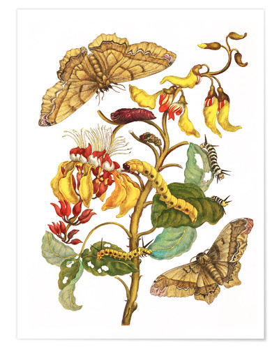 Premium poster Coral tree and silkworm