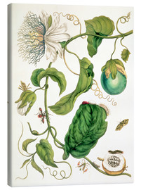 Canvas print  Passion flower and insects - Maria Sibylla Merian