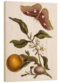 Wood print  Orange and moths - Maria Sibylla Merian