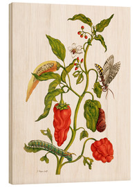 Wood  Peppers and insects - Maria Sibylla Merian