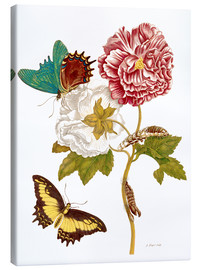 Canvas  Roses with Lepidoptera Metamorphosis - Maria Sibylla Merian