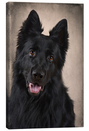 Canvas print  German Shepherd 1 - Heidi Bollich