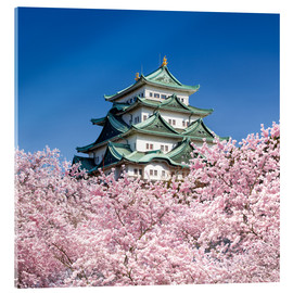 Acrylic print  Nagoya castle with cherry blossom in spring - Jan Christopher Becke