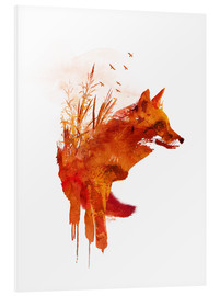 Foam board print  Fox from Lake Balaton - Robert Farkas