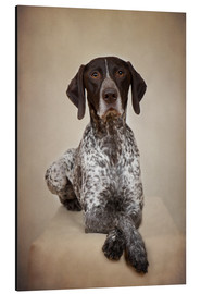 Aluminium print  German shorthaired pointer / 1 - Heidi Bollich