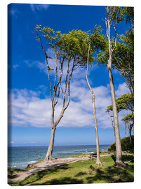 Canvas print  Coastal forest on shore of the Baltic Sea - Rico Ködder