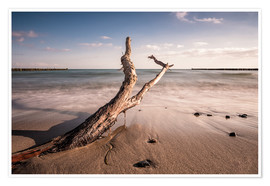 Premium poster  Drift wood on shore of the Baltic Sea - Rico Ködder
