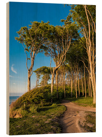 Wood print  Coastal forest on shore of the Baltic Sea - Rico Ködder