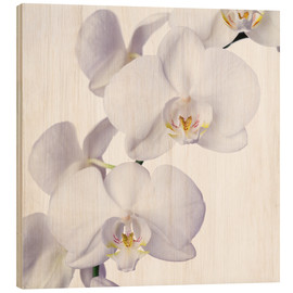 Wood  Orchid flowers - Johnny Greig