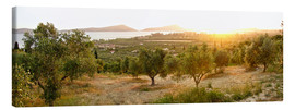 Canvas print  Olive grove at sunrise - Tony Craddock