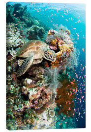 Canvas print  Green turtle - Matthew Oldfield