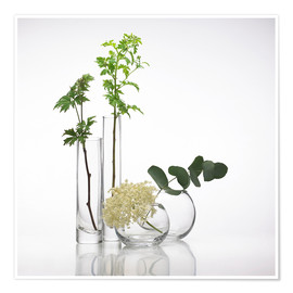Premium poster  Plants in glass vases