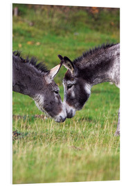 Forex  Donkeys touching noses - Duncan Shaw