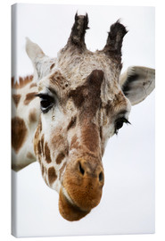 Canvas print  Giraffe - Power and Syred