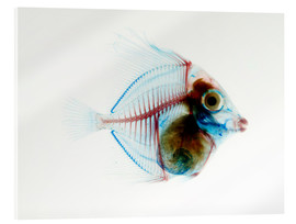 Acrylic glass  Preserved Fish