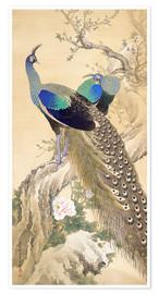 Premium poster  Two peacocks in spring - Imao Keinen