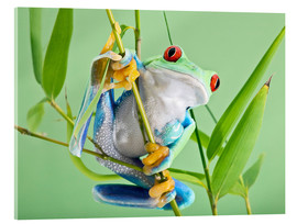 Acrylic glass  Red-eyed tree frog - Linda Wright